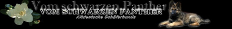 banner_vomschwarzenpanther